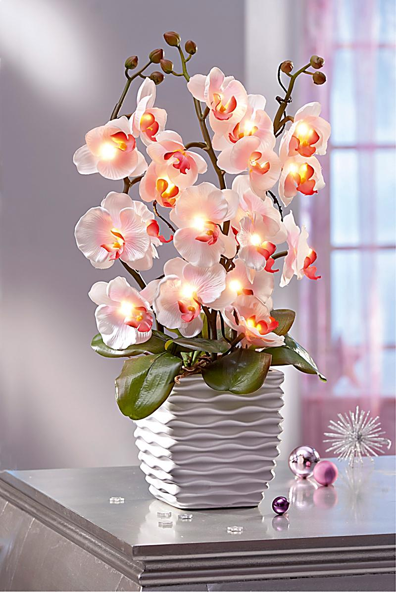 Redirecting to artikel deko trends deko orchidee mit leds 17485243 1 - Deko orchideen ...